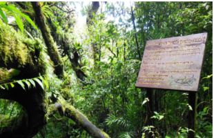 Mombacho Cloud Forest Reserve